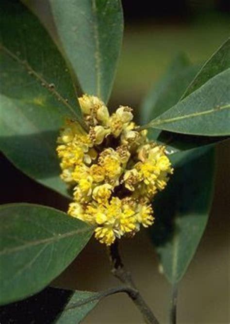 fiori medicinali piante medicinali romanoimpero