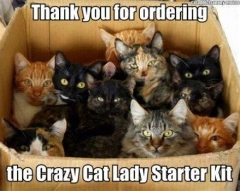 Funny Cat Lady Memes - top 11 best pics of the crazy cat lady meme photos cat