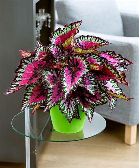 bilder der dekorierten zimmer zimmerpflanzen bilder gem 252 tliche deko ideen mit topfpflanzen