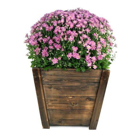 home depot wooden planters pennington 16 in wood tapered planter 100512048 the home depot