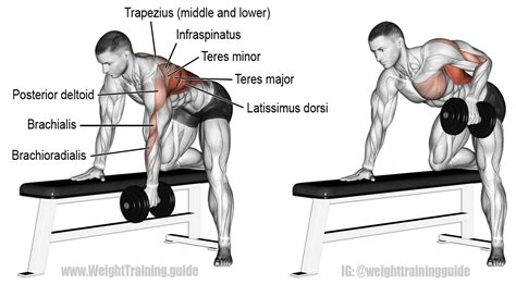 one arm dumbbell row without bench 8 easy at home back abs dumbbell exercises grabonrent