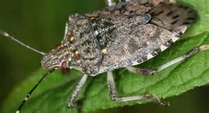 viele fliegen im haus die wanzen kommen oft weit industrieverband agrar