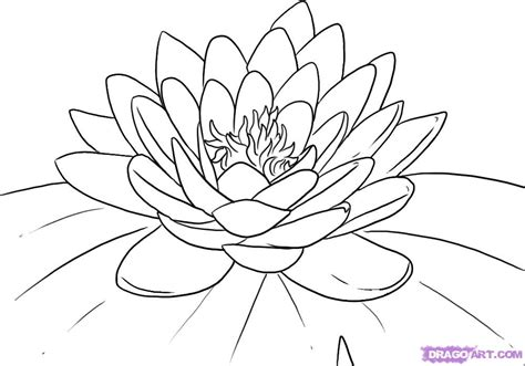 Lotus Flower Coloring Page coloring pages for lotus flower coloring pages for