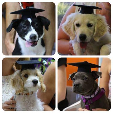 puppy preschool puppy preschool in adelaide pet universe