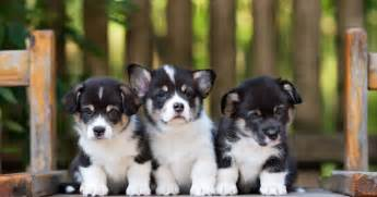 national puppy day here are some pictures of cute puppies