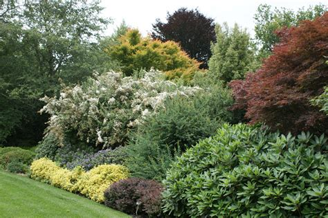 shrub border layering with acer berberis euonymus and he