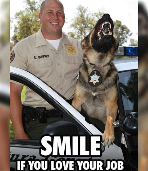 Law Dog Meme - 261 best images about police on pinterest