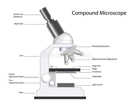 compound light microscope facts compound microscope stock vector illustration of