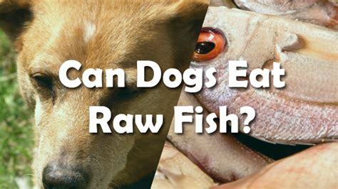 can dogs fish can dogs eat fish pet consider