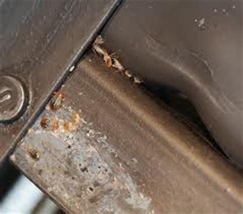 getting high off bed bugs eight tips to keep bed bugs off your apartment mycleaningproducts com