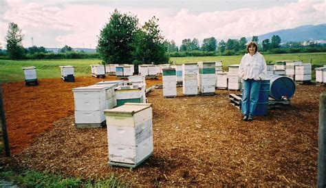 bees in backyard getting to know vlad s apiary make bake grow