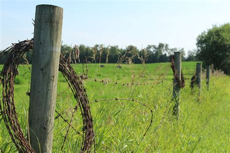 barbed wire fence barbed wire fence farm free stock photo domain pictures