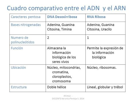 numero de cadenas del adn cuadro comparativo entre adn y arn cuadro comparativo