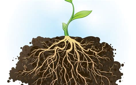 plant roots go to extreme lengths to find water h2o iq