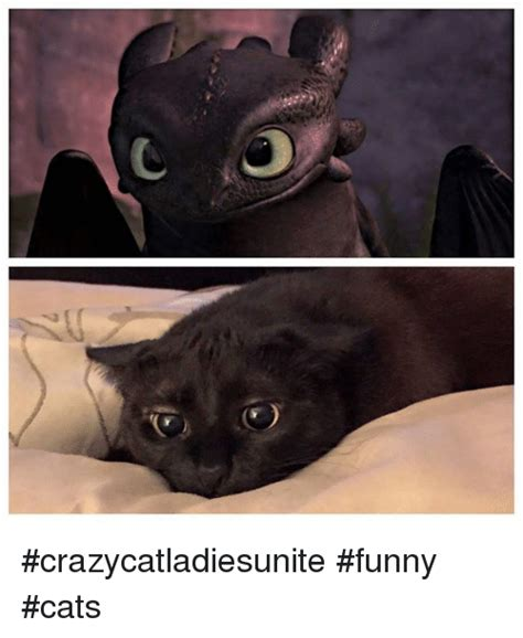 Meme Pictures Funny - crazycatladiesunite funny cats meme on sizzle