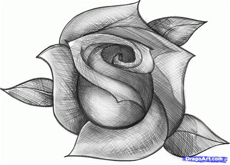 Rose you see here i hope you enjoyed this lesson on sketching a rose
