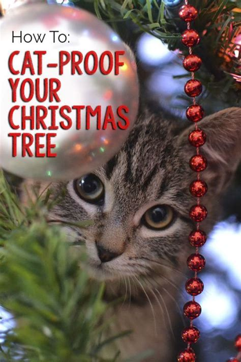 how to keep cats awsy from a christmas tree how to cat proof your tree trees cats and trees