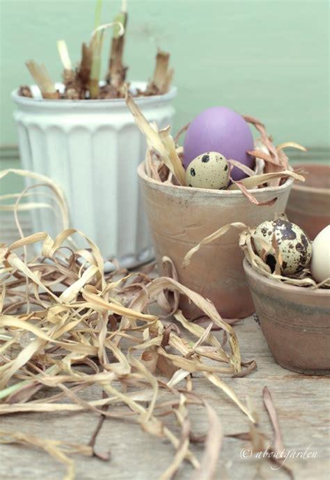 bagnate prima ciclo cosa fare giacinto sfiorito e altri bulbi aboutgarden