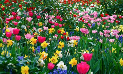 image of spring flowers spring flower wallpaper backgrounds wallpaper cave