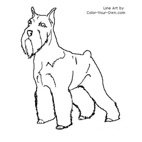 schnauzer terrier coloring page