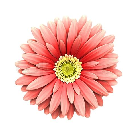 pink daisy flower isolated 3d render stock photo