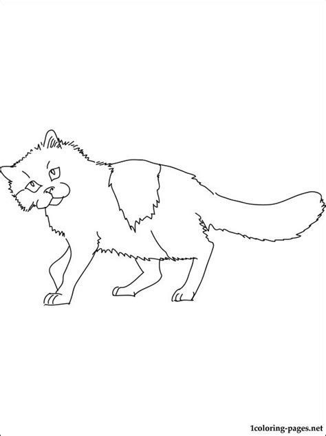 ragdoll cat coloring page ragdoll cat coloring page coloring pages