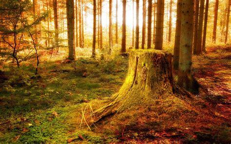 imagenes de paisajes fantasticos floresta fada embebido em cores saturadas e ricos do