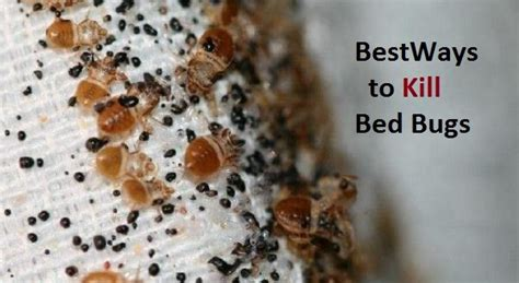 what chemical kills bed bugs how to kill bed bugs naturally