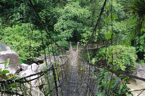rainforest decke the living root bridges of cherrapunji in megahalya india