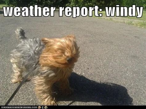 Funny Weather Memes - windy day memes