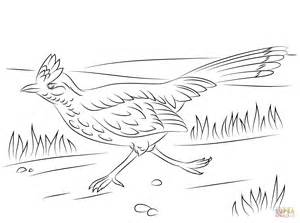 roadrunner bird coloring page greater roadrunner on the run coloring page free