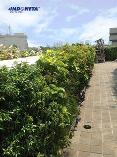 vertical garden indonesia taman vertikal indonesia sea