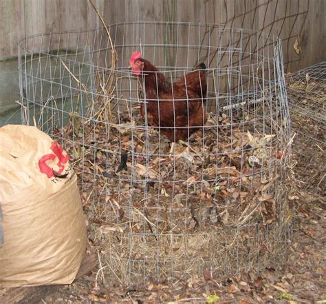 Gardeners Chicken by Using Chickens To Compost Composting Forum At Permies