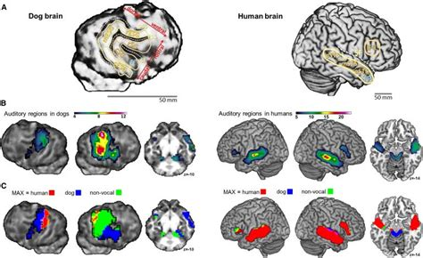 do dogs brains the science and psychology of language does your get you