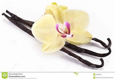 S Vanela White Black vanilla sticks with a flower stock image image 32060981
