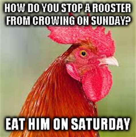 Rooster Meme - rooster imgflip