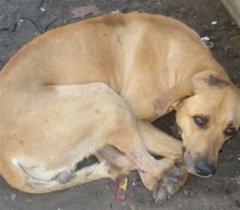 abotonada por un perro videos de zoofilia mujer abotonada por perro videos de zoofilia gratis