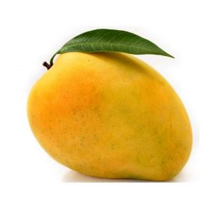 dogs mango can i give my mango is mango appropriate for pet dogs