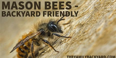 can i raise bees in my backyard 28 images 100 can i