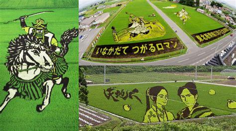 Lukisan Tanam Padi kerennya sawah di jepang jadi kanvas lukisan gunakan padi kabar berita artikel