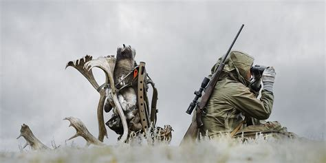 how to to hunt caribou hunt scouting sitting steiner optics