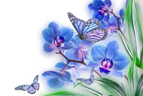 wallpaper flower and butterfly butterflies and flowers wallpapers wallpaper cave