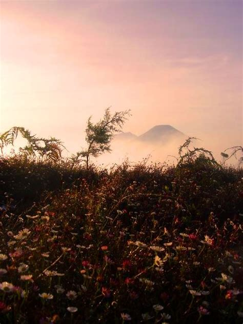 Bibit Bunga Matahari Di Jogja mendaki purnama lonely journey to mt prau 2 565mdpl part