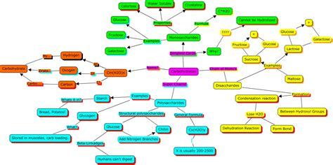 exle of carbohydrates lipids concept map