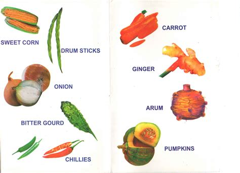 6 vegetables name in bonala kondal the list of vegetable names in and