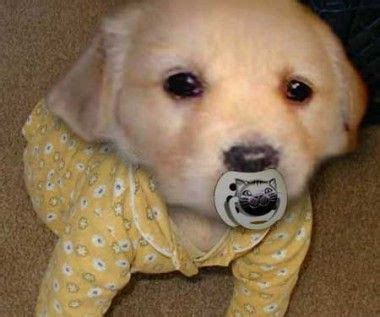puppy in pajamas 15 best puppies in pajamas images on animal babies fluffy pets and puppys