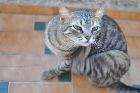 can i get worms from my my cat has worms how can i get rid of them cat advice paws and effect
