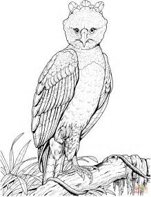coloring page harpy eagle harpy eagle coloring page free printable coloring pages