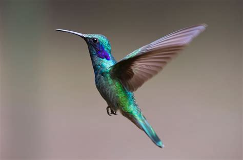 Birds Top top 10 migratory birds in the world