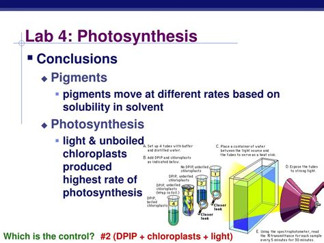 design experiment photosynthesis ppt ap biology powerpoint presentation id 302778